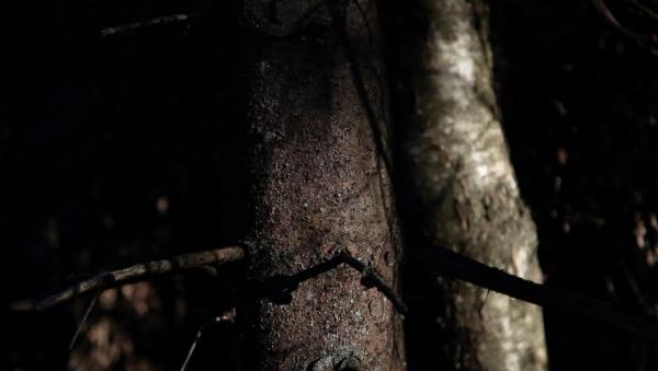 sprucelight2