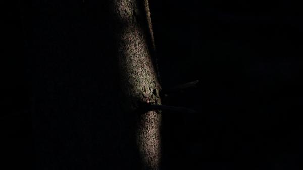 sprucelight